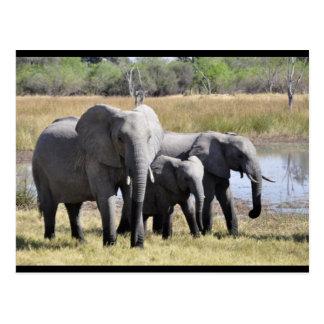 Baby-Elefant-und Familien-Postkarte Postkarte