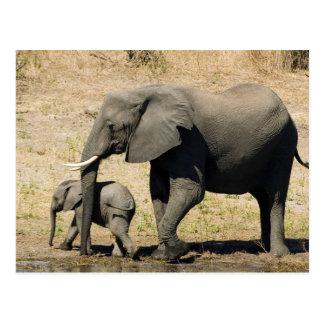 Baby-Elefant und Mutter Postkarte