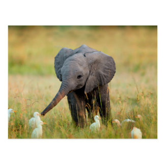 Baby-Elefant und Vögel Postkarte