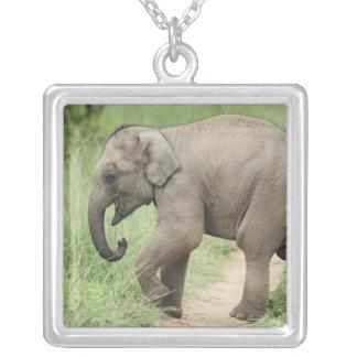 Baby-Elefant, welche der Mutter, Corbett folgt Versilberte Kette