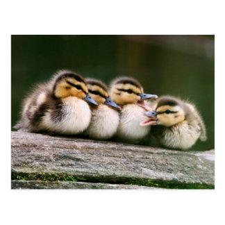Baby-Enten auf Klotz des Holzes Postkarte