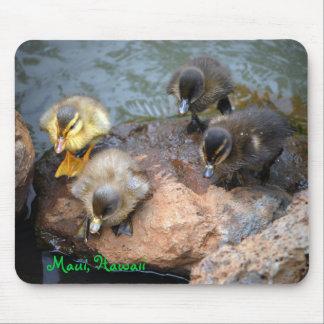 Baby-Entlein an Lagune Mauis Hawaii Mousepad