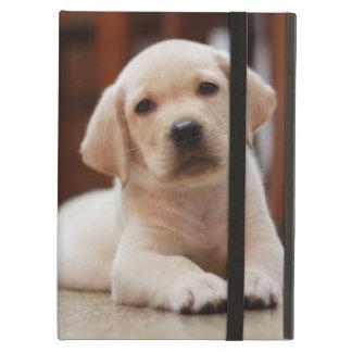 Baby-gelbes Labrador-Hündchen, das auf Bauch legt