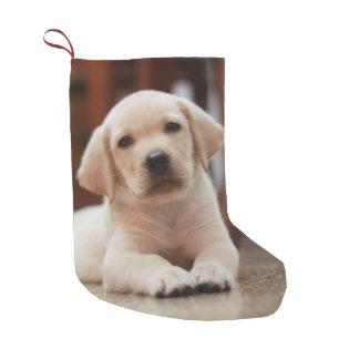 Baby-gelbes Labrador-Hündchen, das auf Bauch legt Kleiner Weihnachtsstrumpf