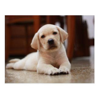 Baby-gelbes Labrador-Hündchen, das auf Bauch legt Postkarte