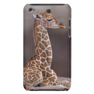 Baby-Giraffenipod-Touch-Case-Mate-Fall iPod Case-Mate Case
