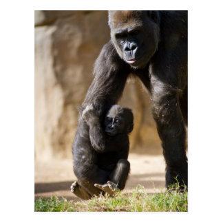 Baby-Gorilla Postkarte