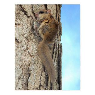 Baby-graue Eichhörnchen-Postkarte Postkarte