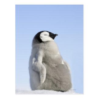 Baby-Kaiser-Pinguin, Schnee-Hügel-Insel Postkarte