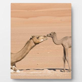 Baby-Kamel und seine Mutter Fotoplatte