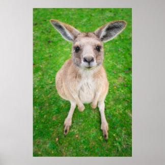 Baby-Känguru Getty Bild-| Poster
