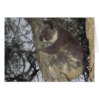 Baby-Koala, der Baum-Karte umarmt Karte
