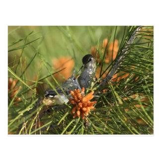 Baby-Kolibri, der gefüttert wird Postkarte