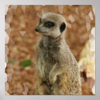 Baby Meerkat Plakat-Druck