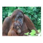 Baby-Orang-Utan mit Mutter-Postkarte