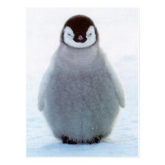 Baby-Pinguin Postkarte
