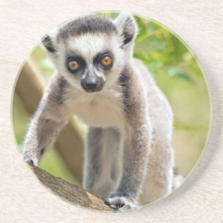 Baby Ring-angebundener Lemur Sandstein Untersetzer