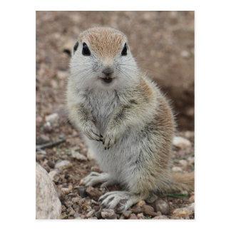 Baby Rund-angebundenes Grundeichhörnchen Postkarte