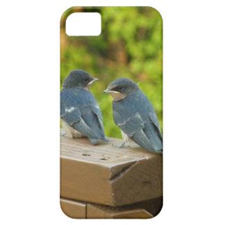 Baby-Scheunen-Schwalben-Natur-Vogel-Fotografie iPhone 5 Hüllen