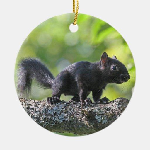 baby schwarzes eichh rnchen weihnachtsbaum ornamente zazzle. Black Bedroom Furniture Sets. Home Design Ideas