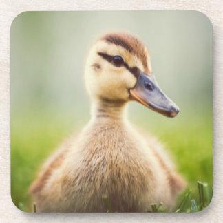 Baby-Stockenten-Ducken Getränkeuntersetzer