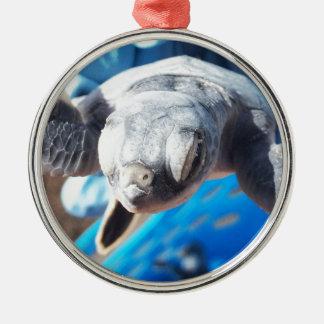 Baby-Suppenschildkröte Silbernes Ornament