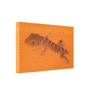 Baby Tokay Gecko Leinwanddruck