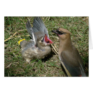 Baby-Vogel-Zederwaxwing-Vogel-Tier-wild lebende Karte