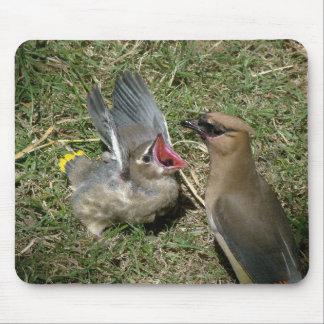 Baby-Vogel-Zederwaxwing-Vogel-Tier-wild lebende Mousepad
