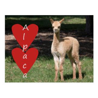 Babyalpaka-Liebepostkarte Postkarte