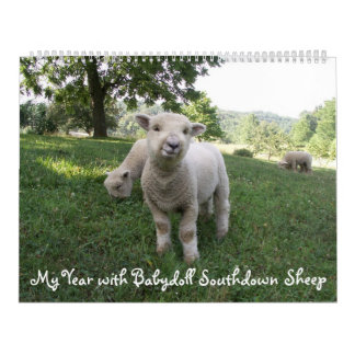Babydoll-Southdownschaf-Kalender Abreißkalender