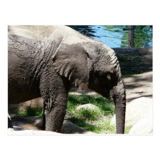 Babyelefant durch Wasser Postkarte