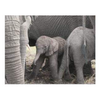 Babyelefant ist stehend und wobbly postkarte
