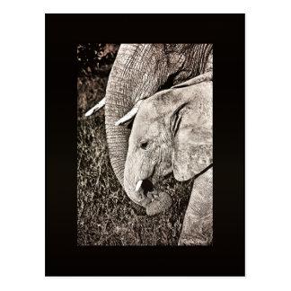 Babyelefant Postkarte