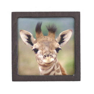"Babygiraffenbild, Kenia, Afrika | 2"" x 2"" Schachtel"