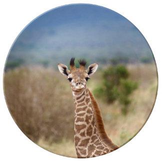 Babygiraffenbild, Porzellan Kenias, Afrika   Porzellanteller