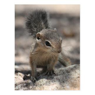 BabyHarris Antilopen-Eichhörnchen Postkarte