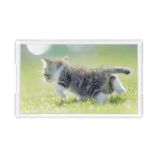 Babykatze, die auf Grasfeld läuft Acryl Tablett