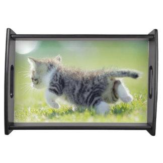 Babykatze, die auf Grasfeld läuft Tablett