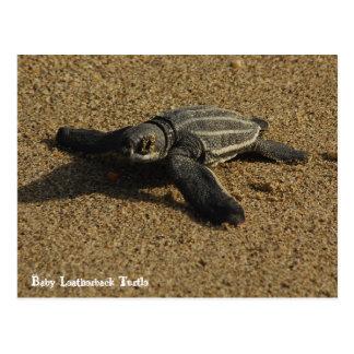 Babyleatherback-Schildkröte Postkarte