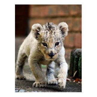 Babylöwe Prowler Postkarte