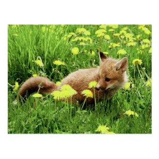 Babyroter Fox auf dem grünen Gebiet mit gelben Postkarte