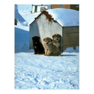 Babyschlittenhunde, Grönland Postkarte