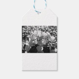 Backlits weiße Cyclamen-Blumen auf dunklem Geschenkanhänger