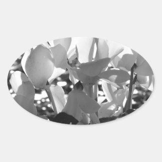 Backlits weiße Cyclamen-Blumen auf dunklem Ovaler Aufkleber