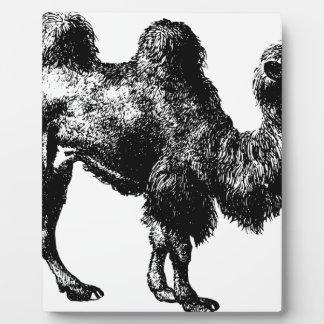 Bactrian Kamel Fotoplatte
