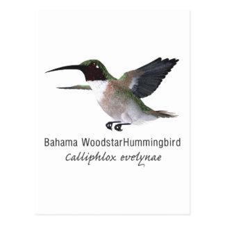 Bahama Woodstar Kolibri mit Namen Postkarte