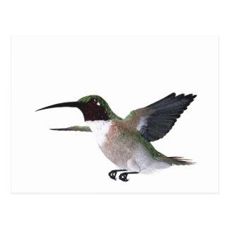 Bahama Woodstar Kolibri Postkarte