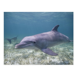 Bahamas, großartige Bahama Insel, Freihafen, Postkarte