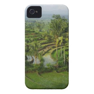 Bali - junge Terrassericefields und -palmen Case-Mate iPhone 4 Hülle